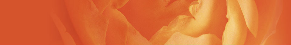 Elegia_Header_Orange2_sup
